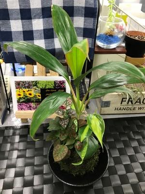 【Interior Plants】 苔玉寄せ植え A