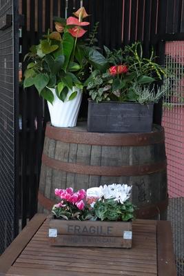 【ガーデンシクラメン☆フェアリーミニ】木製BOX2個セット