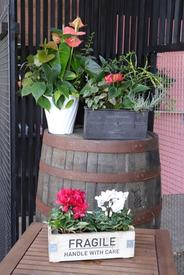 【ガーデンシクラメン★フェアリーミニ】木製BOX入り2個セット