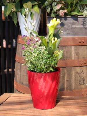【1鉢限定 送料無料】季節の寄せ植え5号赤鉢