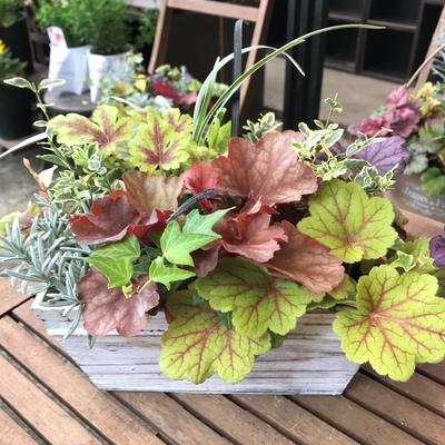 【jardin 季節の寄せ植え】 木製BOX