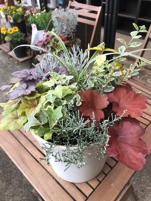 【jardin 季節の寄せ植え】 6号鉢