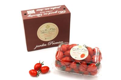 【ミニギフト】高糖度ミニトマト シュガープラム 500g