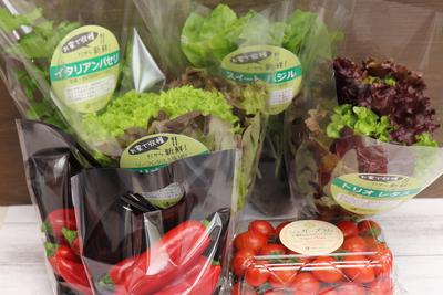 農場直送フレッシュ野菜 ~美と健康セレクト~
