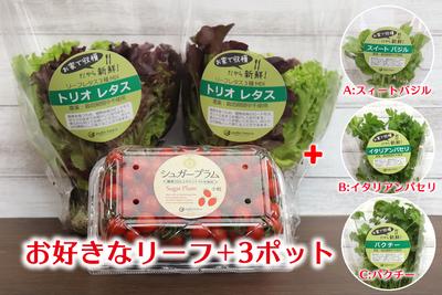農場直送フレッシュ野菜 ~選べる美と健康セレクト(小粒)~A