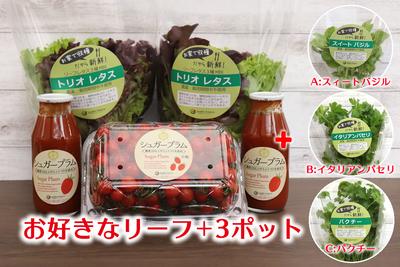 農場直送フレッシュ野菜 ~選べる美と健康セレクト(小粒)~B