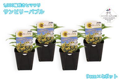 【予約販売】jardin『1,000輪咲きヒマワリ_サンビリーバブル』9cmポット苗    4ポット