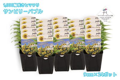 【予約販売】jardin『1,000輪咲きヒマワリ_サンビリーバブル』9cmポット苗    24ポット