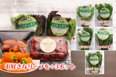 農場直送フレッシュ野菜 ~選べる美と健康セレクト~A