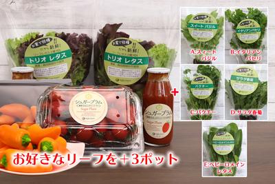 農場直送フレッシュ野菜 ~選べる美と健康セレクト~B
