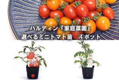 jardin『家庭菜園』選べるミニトマト苗9cm    4ポット