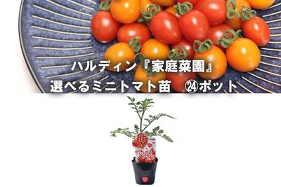 jardin『家庭菜園』選べるミニトマト苗9cm    24ポット