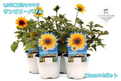 12cm苗×4ポット 1,000輪咲きひまわり サンビリーバブル ブラウンアイガール jardin