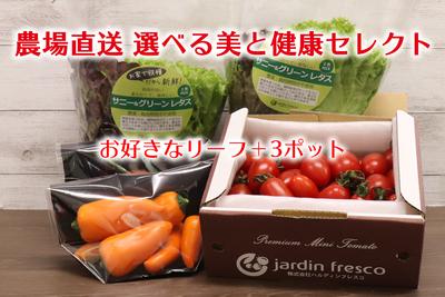 ~選べる美と健康セレクト~A 農場直送フレッシュ野菜