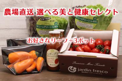 ~選べる美と健康セレクト~B 農場直送フレッシュ野菜