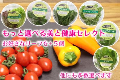 ~もっと選べる美と健康セレクト~C 「夏」は軽井沢産のリーフ野菜とハーブをお届け