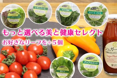 ~もっと選べる美と健康セレクト~D 「夏」は軽井沢産のリーフ野菜&ハーブをお届け
