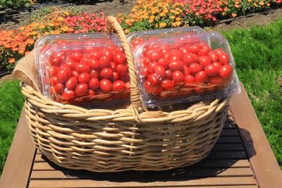数量限定品 アウトレットシュガープラム2kg 糖度10度以上の高リコピン薄皮フルーツミニトマト