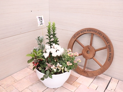 【25】ENTRANCE&BALCONY 花鳥風月 【花】 賀正2020アレンジメント鉢/8号鉢