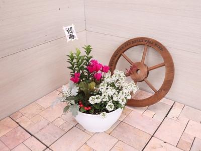 【26】ENTRANCE&BALCONY 花鳥風月 【鳥】 迎春2020アレンジメント鉢/8号鉢