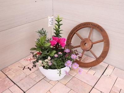【27】ENTRANCE&BALCONY 花鳥風月 【風】 2020アレンジメント鉢/8号鉢