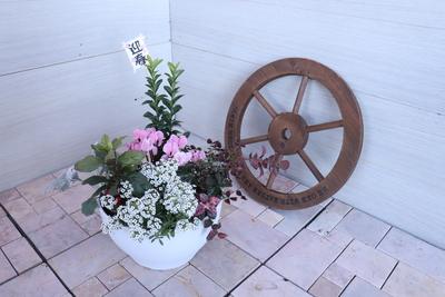 【28】ENTRANCE&BALCONY 花鳥風月 【月】 2020アレンジメント鉢/8号鉢