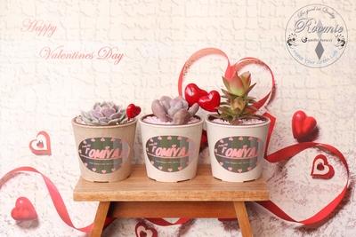 OMiYA 多肉植物Valentineセット