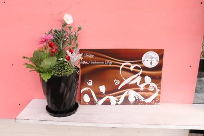 ガーベラ キャンディポップ寄せ植え バレンタイン Twist黒鉢