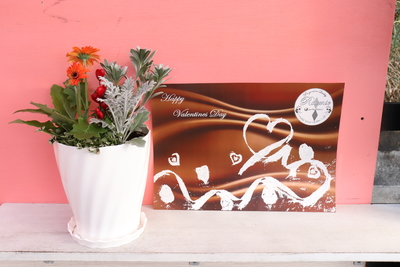 ガーベラ キャンディポップ寄せ植え バレンタイン Twist白鉢