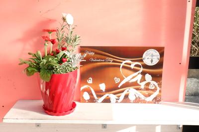 ガーベラ キャンディポップ寄せ植え バレンタイン Twist赤鉢