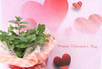 Ribbon Herb ♡Valentaine Gift♡(アップルミント)