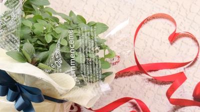 Ribbon Herb ♡Valentaine Gift♡(レモンミント)