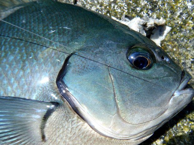 伊豆半島、伊豆諸島の磯釣り釣行を定期的に計画