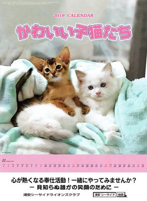 2019 チャリティカレンダー かわいい子猫たち