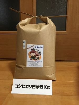 【新米】コシヒカリ   5Kg精米