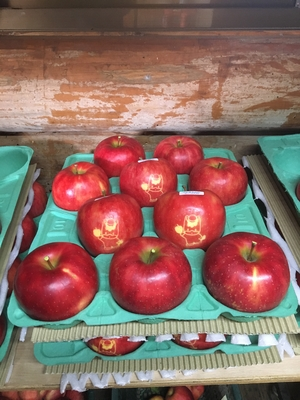 りんご陽光5Kg《ぐんまちゃんマーク入り》