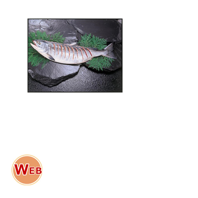 新巻鮭切れ目姿造り2.5kg