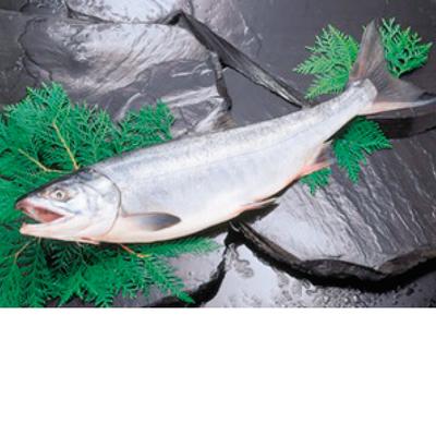 新巻鮭姿造り 2kg