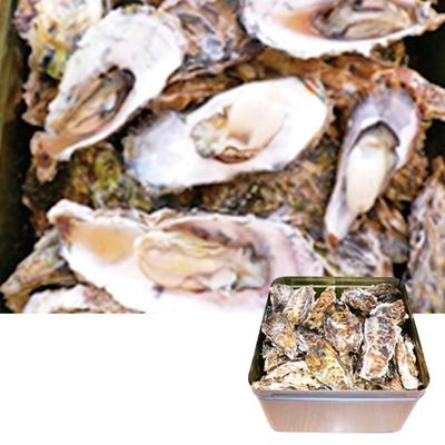 焼牡蠣お徳用詰合せ(簡単缶入り)