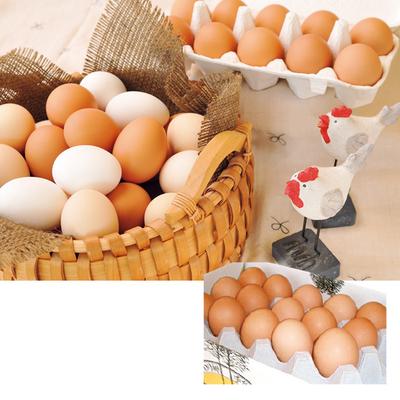 国産鶏種もみじたまご36個