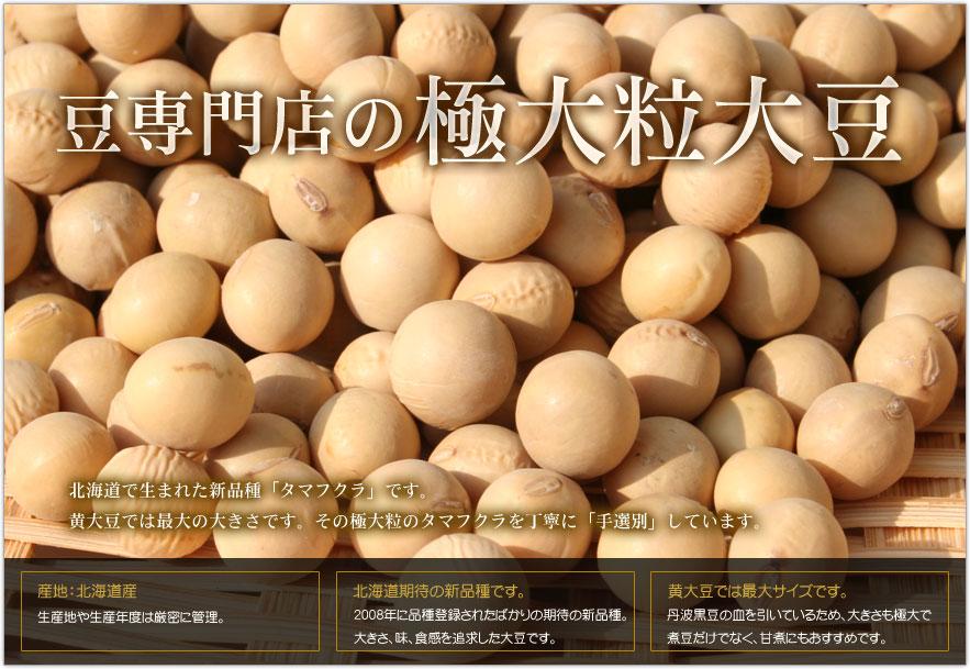 豆専門店の極大粒大豆(タマフクラ)