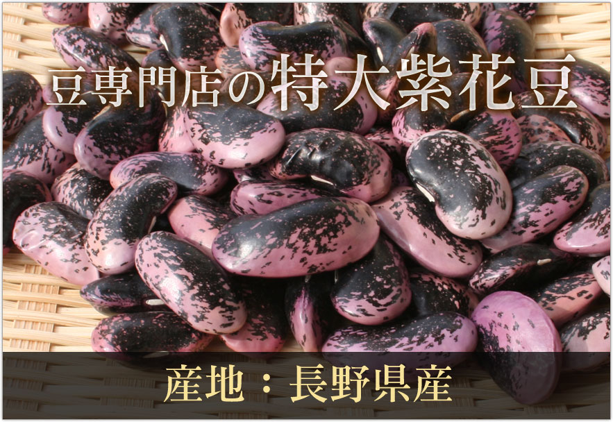 豆専門店の特大紫花豆(群馬県嬬恋村産)