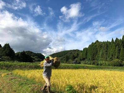 【天日干し】のと自然栽培米 めぐみ − コシヒカリ