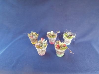 (送料込み)【巣籠もり】サキュレント Self made 栽培キット(ハイドロタイプ) 6個セット
