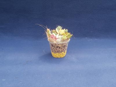 (送料込み)【巣籠もり】サキュレント Self made 栽培キット(ハイドロタイプ) 3個セット