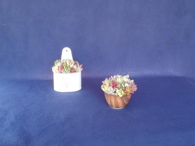 (送料込み)多肉植物 寄せ植え 2鉢