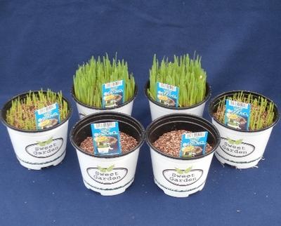 ネコすっき生草8鉢 大きさが違うセット