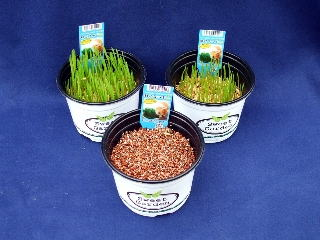 ネコすっき生草3鉢 大きさが違うセット