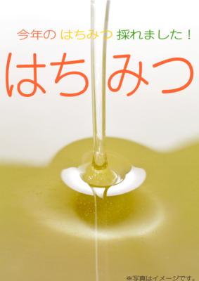 みかん蜂蜜 紀州 和歌山有田産 純粋はちみつ 2020年産 【1200g】
