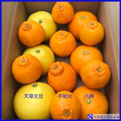 天草の「柑橘三昧」 〜ご家庭向け〜
